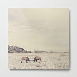 Sparring Elk in Wyoming - Wildlife Photography Metal Print