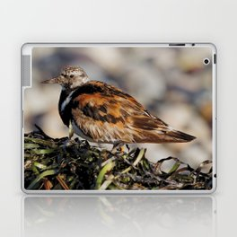 Ruddy Turnstone on Seaweed Mountain at the Beach Laptop & iPad Skin