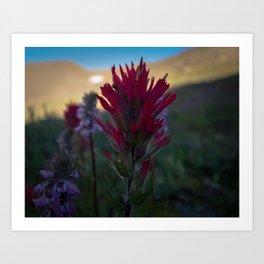 Mountain Flower Art Print