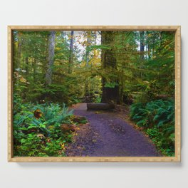 Cathedral Grove on Vancouver Island, BC Serving Tray