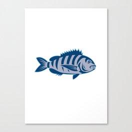 Sheepshead Fish Isolated Retro Canvas Print