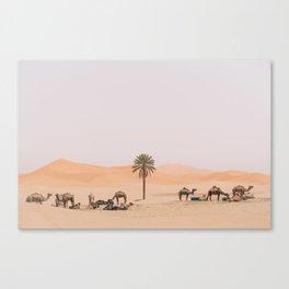 Sahara Camels Canvas Print