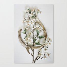 Sheds & Blossoms Canvas Print