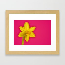 Dafodile on Pink Framed Art Print