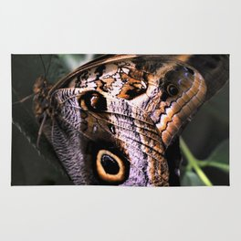 Sunbathing Giant Owl Butterfly Rug