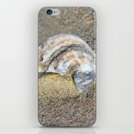 Shell in the Sand iPhone Skin