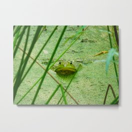 frog friend Metal Print