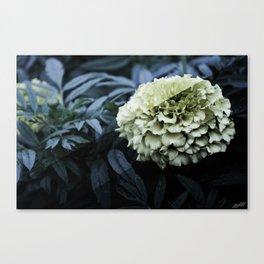 Crossed Exposure Canvas Print