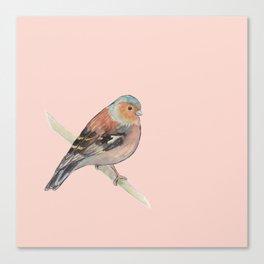 Chaffinch BIRD PRINT Canvas Print