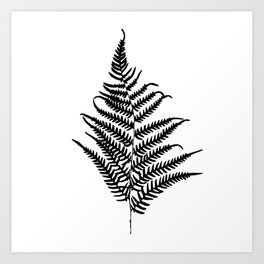 Fern silhouette. Isolated on white background Art Print
