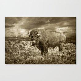 American Buffalo in Sepia Tone Canvas Print