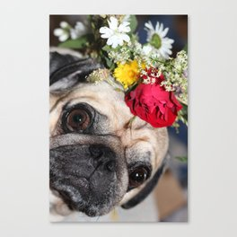 Flowers pug Canvas Print