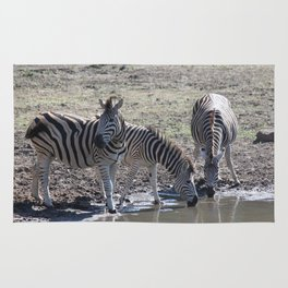 Zebra at the watering hole Rug