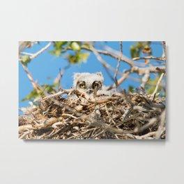 Greathorned Owlet Metal Print
