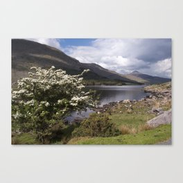 Peaceful afternoon in the Black Valley Canvas Print