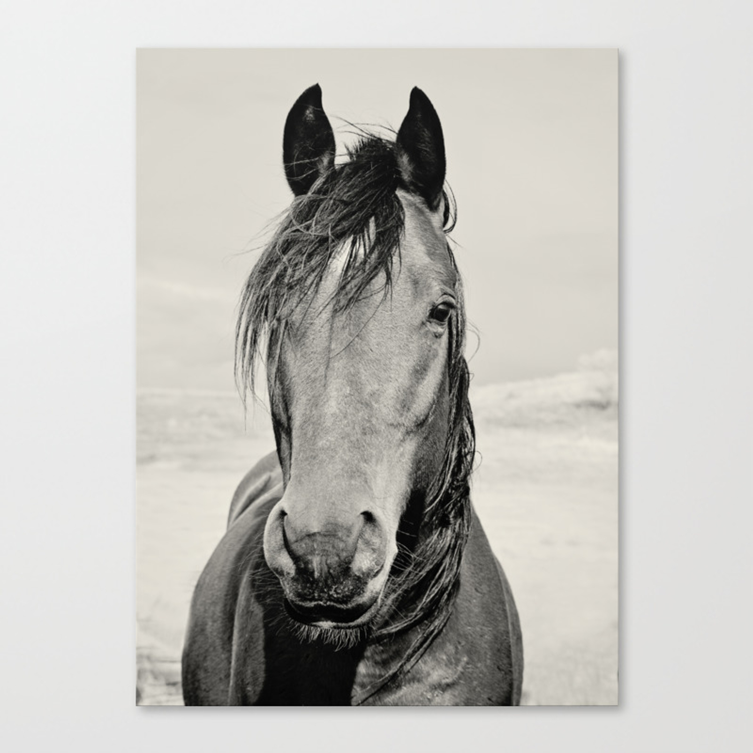 Black And White Horse Portrait Canvas Print By Applesandoatsphotography Society6