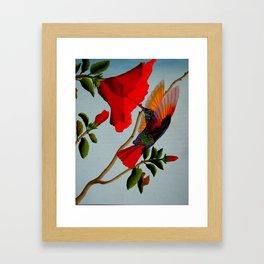Magnificent Hummingbird Framed Art Print