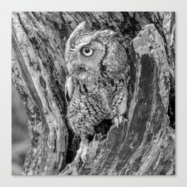 Echo the Screech Owl by Teresa Thompson Canvas Print