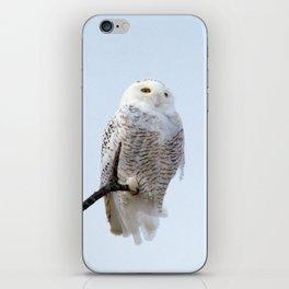 Lofty Vision (Snowy Owl) iPhone Skin