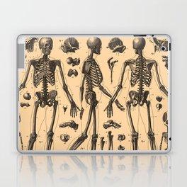 Vintage Human Skeleton Anatomy Diagram (1907) Laptop & iPad Skin