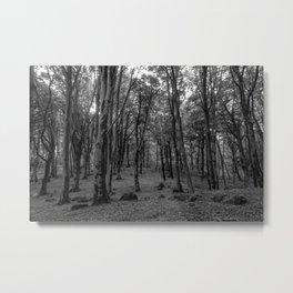 Black and White Soriano nel Cimino's Faggeta, Italy - Mount Cimino Faggeta Metal Print