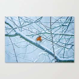 Robin in the cold Canvas Print