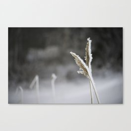 January Frost Canvas Print