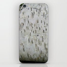 Birch Bark on a Fallen Tree iPhone Skin