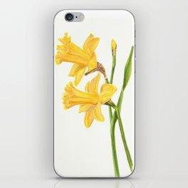 Early Daffodils iPhone Skin