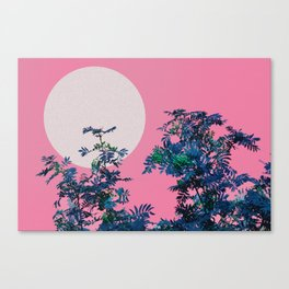 Pink sky and rowan tree Canvas Print