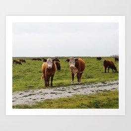 California Cows Art Print