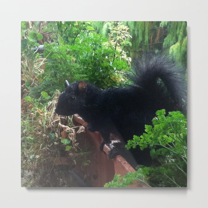 Squirrel raid! Metal Print