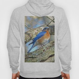 Bluebird in Tree Hoody