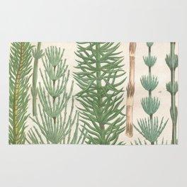 Botanical Horsetail Plants Rug