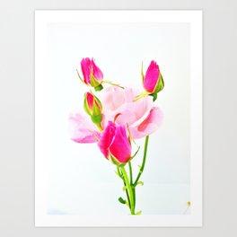 family roses Art Print