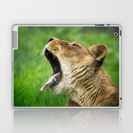 Yawning Lion Laptop & iPad Skin