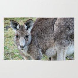 Eastern Grey Kangaroo Rug