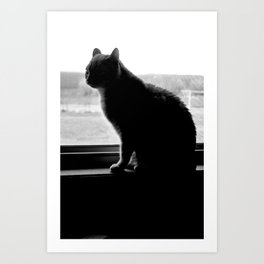 Cat No. 1 Art Print