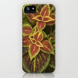Coleo Coleus iPhone Case