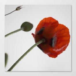 poppies free spirits of the garden Canvas Print