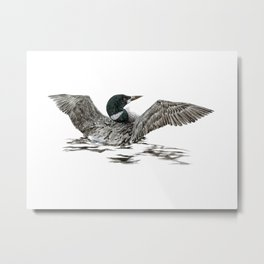 Morning Stretch - Common Loon Metal Print