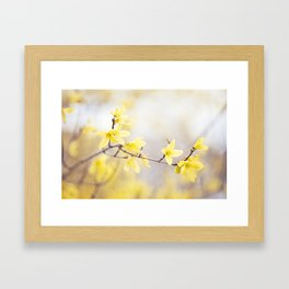 Yellow Forsythia Flower Photography, Yellow Floral Spring Art, Springtime Branches Photo Framed Art Print