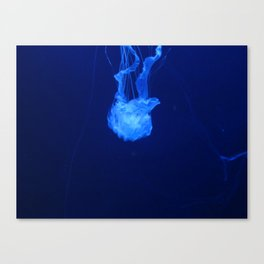 Jellyfish 3 Canvas Print