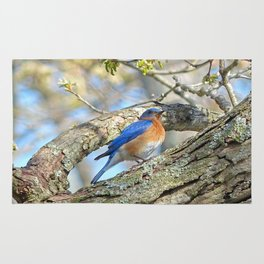 Bluebird in Tree Rug