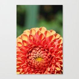 Orange Dahlia Canvas Print
