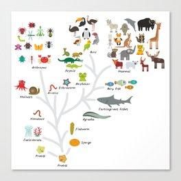 Evolution in biology, scheme evolution of animals on white. children's education back to scool Canvas Print