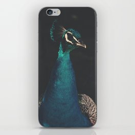 peacock and proud iPhone Skin