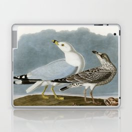Vintage Seagull Illustration - Audubon Laptop & iPad Skin