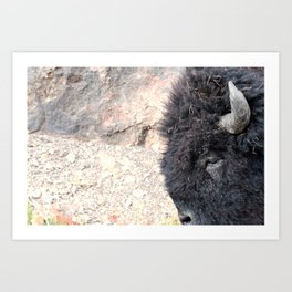Bison Drive By Art Print