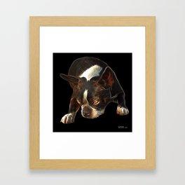 Boston Terrier Dog Pop Art - 8384 - BB Framed Art Print